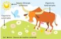 «Cycle de la matière organique, amendement en agroécologie»