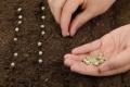 Distribution d'assortiments de graines et enregistrement des plants de pommes de terre, engrais, amendements